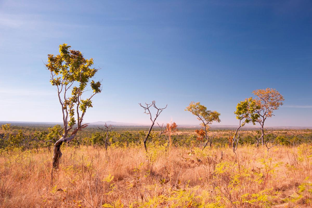 Monitoramento de biomas: Projeto CERRADO só tem verba até o final deste ano